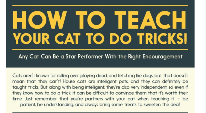infographics tricks Cats - 4560133