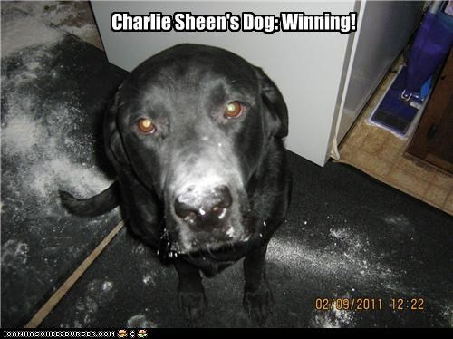 Charlie Sheen's Dog: Winning!