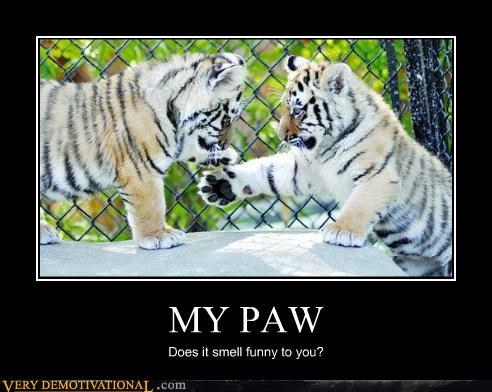 MY PAW Does it smell funny to you?