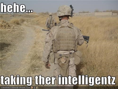 animals Cats cute intelligence kitten lolcats military soldiers spy - 4560912896