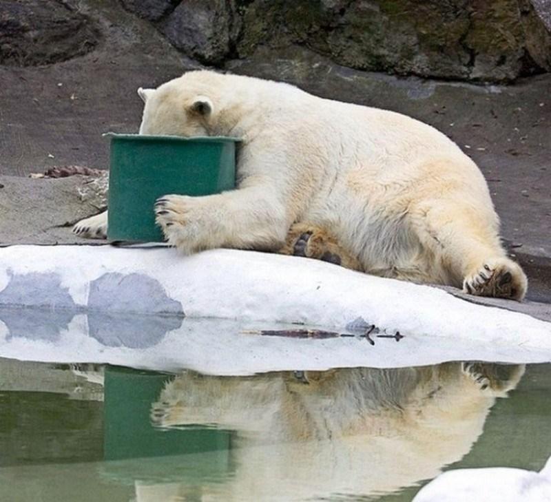 photos night hangover funny animals - 4561157