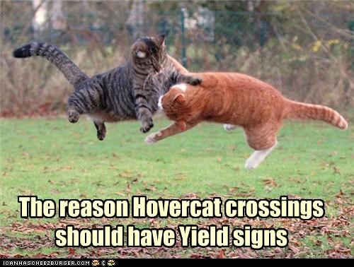 captioned,captions,cat,Cats,collision,crossing,crossings,have,HoverCat,reason,should,signs,tabby,yield