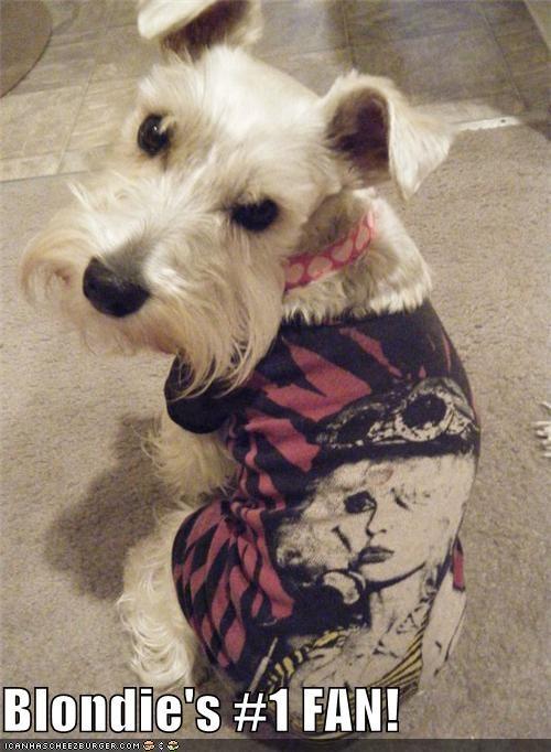 biggest blondie debbie harry fan fashion number number one one schnauzer shirt wearing - 4561624832