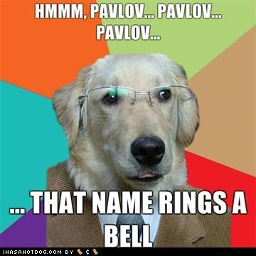 business dog labrador meme memedogs photoshop - 4561635840