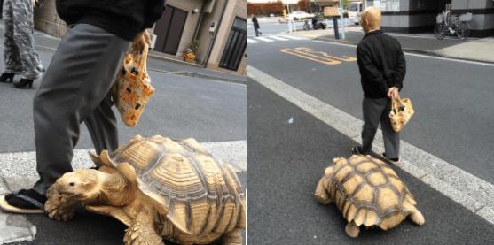 street pets owner walks tokyo giant turtle - 4561669