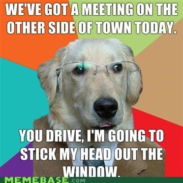 animemes car rides dogs drive head out the window meeting - 4561783040