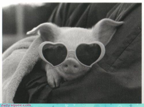 baby cliché cliches diamonds diva favorite color pig piglet pink squee spree sunglasses