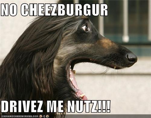 Cheezburger Image 4562392832