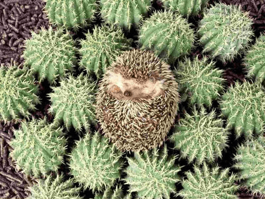 photos totally looks like hedgehog funny - 4562437