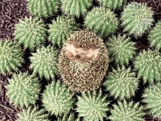 photos totally looks like hedgehog funny - 4562437