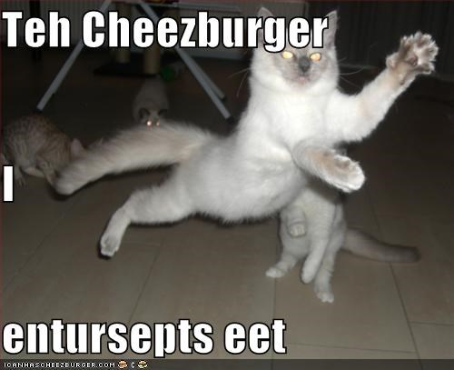 Cheezburger Image 4562460672