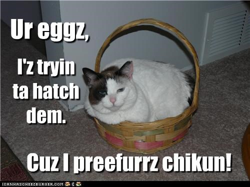 caption captioned cat chicken eggs hatch preference trying - 4562630656
