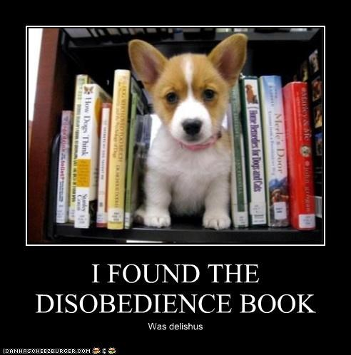book,bookshelf,corgi,delicious,disobedience,found,puppy,was