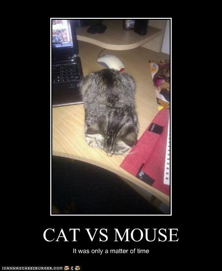 CAT VS MOUSE It was only a matter of time