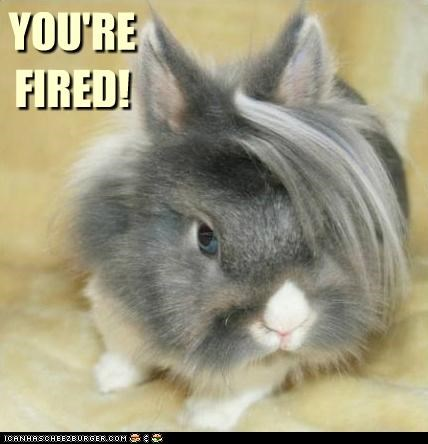 bunny caption captioned catchphrase donald trump fired haircut quote you are - 4563231744