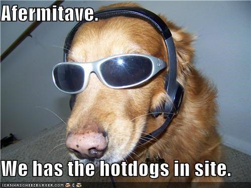affirmative communicating golden retriever headset hotdog hotdogs located site sited sunglasses Target