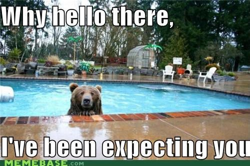 bear swim-pool - 4564324864