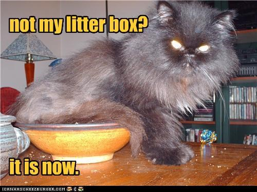 angry,caption,captioned,cat,denial,litter box,new,not,now,ownership,problem,rule