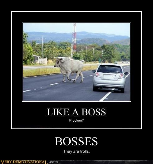 bosses,cow,Like a Boss,troll