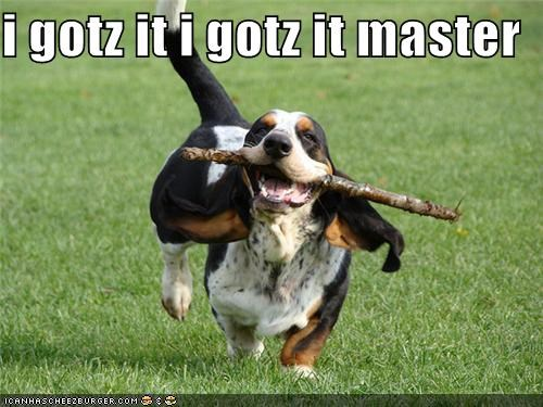 basset hound,excited,fetch,fetching,got it,master,stick