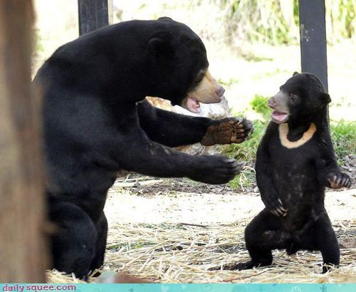 acting like animals bear bears breakfast cub lecture morning oatmeal reprimanding stealing sun bear sun bears - 4565398528