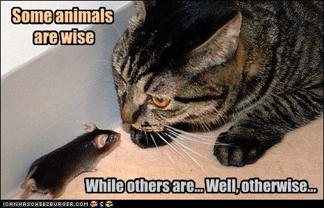 Some animals are wise While others are... Well, otherwise...