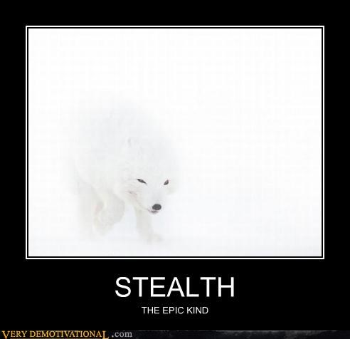 snow fox,stealth,epic
