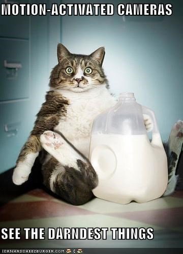 cameras caption captioned cat caught milk see stealing wide eyed - 4566768384