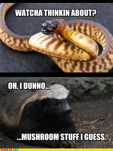 badger badger badger,lol,Mushrooms,snakes,thinking