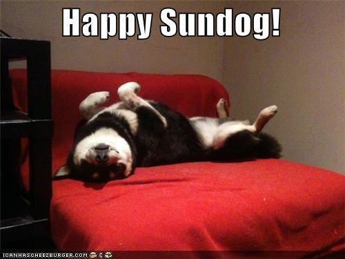 asleep happy happy sundog shiba inu sleeping Sundog upside down - 4567873280