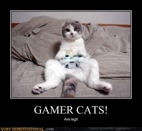 cat,video games,nerds