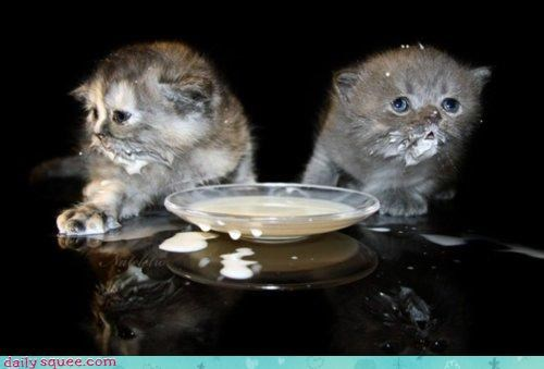 accident acting like animals cat Cats drinking excuse explanation FAIL kitten mess milk story - 4568582400
