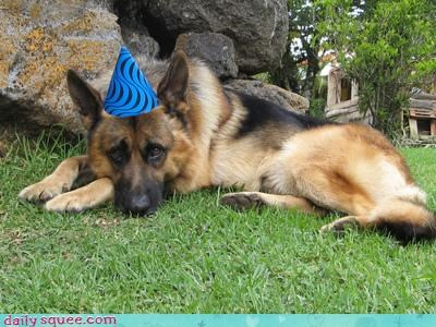 acting like animals birthday dogs german shepherd hat invitations lonely moping Party party hat Sad short notice