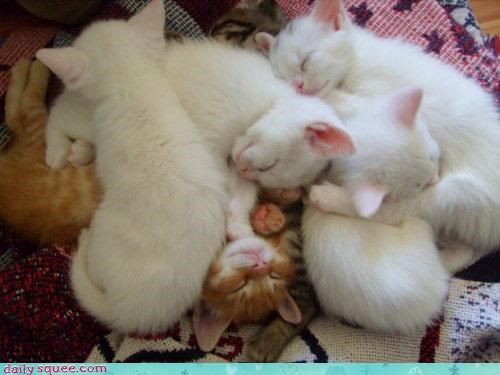 afternoon asleep cat Cats kitten nap napping pile sleeping - 4568646400