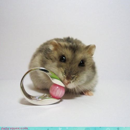 excited hamster honeymoon I Do marriage marry proposal proposing question ring tiny yes - 4568764672