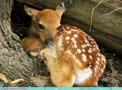 asking,baby,begging,breakfast,cinnamon rolls,deer,fawn,morning,noms,offer,question,wake up,waking up