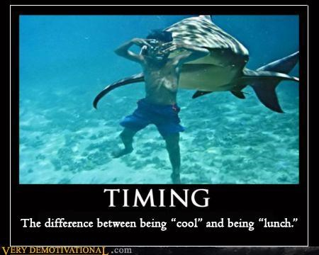 timing,cool,lunch,shark,bad idea
