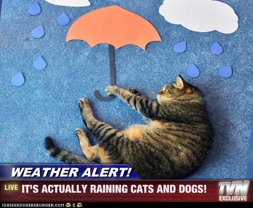 WEATHER ALERT! - IT'S ACTUALLY RAINING CATS AND DOGS!