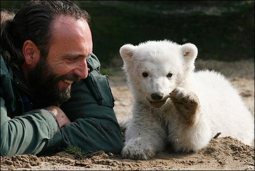 Berlin Zoo,Knut,Knutmania,rip