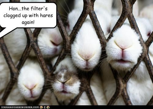 again,bunnies,bunny,caption,captioned,clogged,filter,hair,hare,homophone,pun,rabbit,rabbits