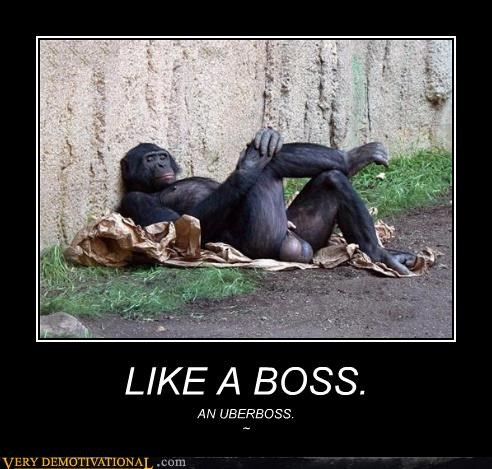 boss chimp monkey nards - 4570868992