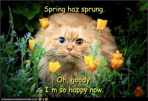 Oh, goody. I'm so happy now. Spring haz sprung.