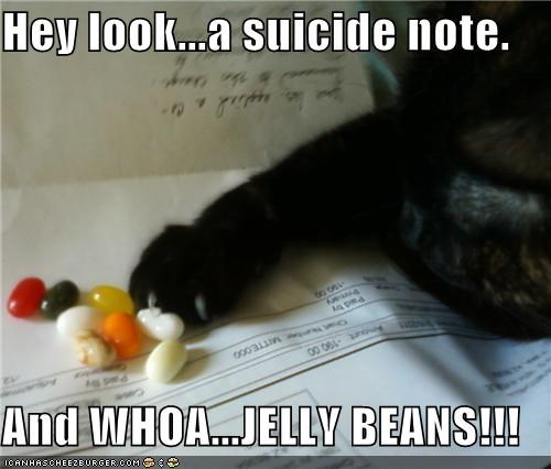 caption captioned cat examining excited Hey jelly beans look note observation observing suicide whoa - 4572693504