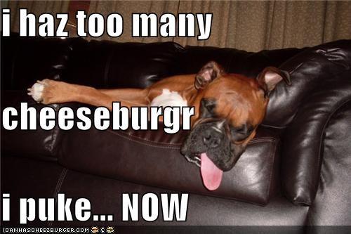 Cheezburger Image 4574197760