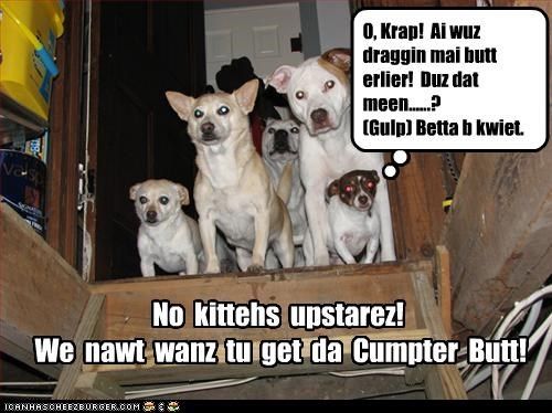 No kittehs upstarez! We nawt wanz tu get da Cumpter Butt! O, Krap! Ai wuz draggin mai butt erlier! Duz dat meen......? (Gulp) Betta b kwiet.