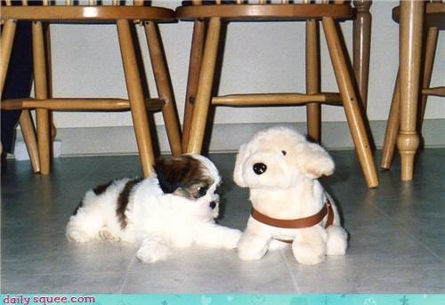 curious,dogs,examining,inquisitive,mechanical,playmate,puppy,reader squees,shih tzu,toy