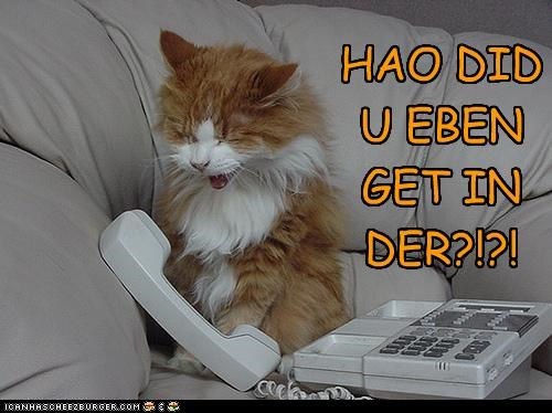 caption captioned cat confused get how in phone question receiver shouting stuck tabby there - 4575728384