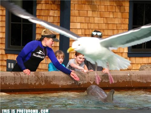 Animal Bomb,animals,dolphin,gull,sea world
