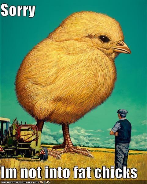 animal art chicken color funny illustration