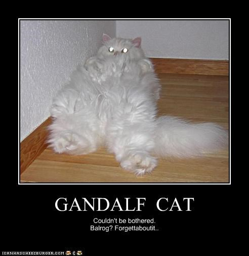 GANDALF CAT Couldn't be bothered. Balrog? Forgettaboutit..